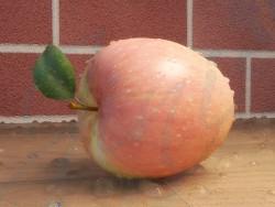 Manzana con gota de agua
