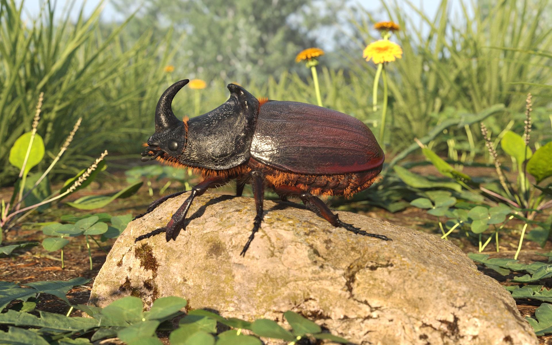 Rhinoceros beetle in 3d max corona render image