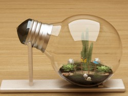Micro-world in the lamp