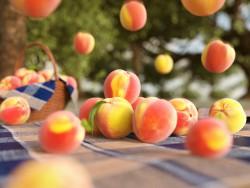 Pluie de fruits