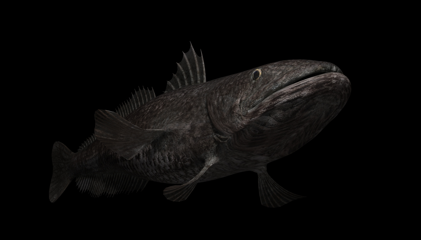 3d visualization of the project in the Undersea world 3d max, render corona render of masterV