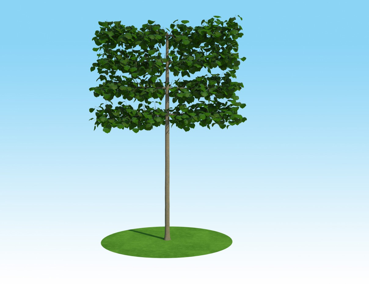 3d visualization of the project in the 3D model Linden macrophylla tapestry on the trunk 3d max, render vray 2.0 of max-model