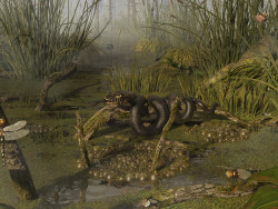 Common swamp