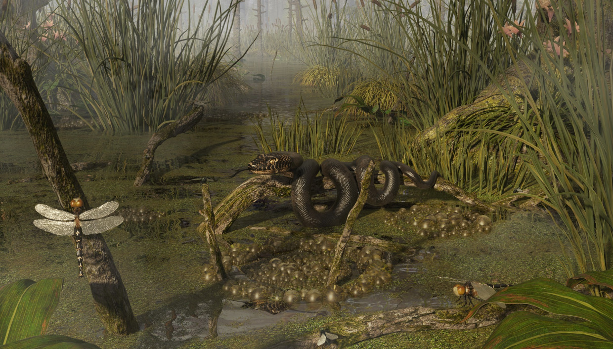 3d visualization of the project in the Common swamp 3d max, render corona render of masterV