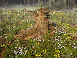 Such is the stump