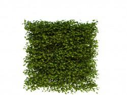Изгородь - боярышник