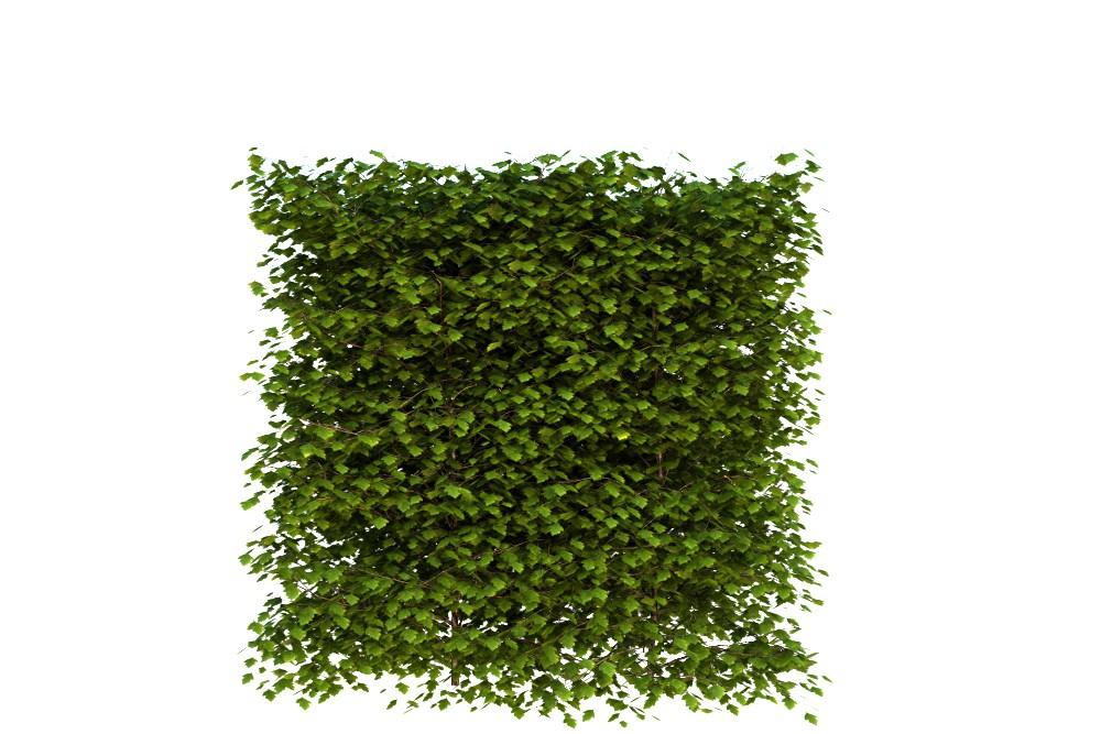 Изгородь - боярышник в 3d max vray 3.0 изображение