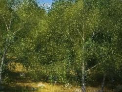 Sadece bir orman