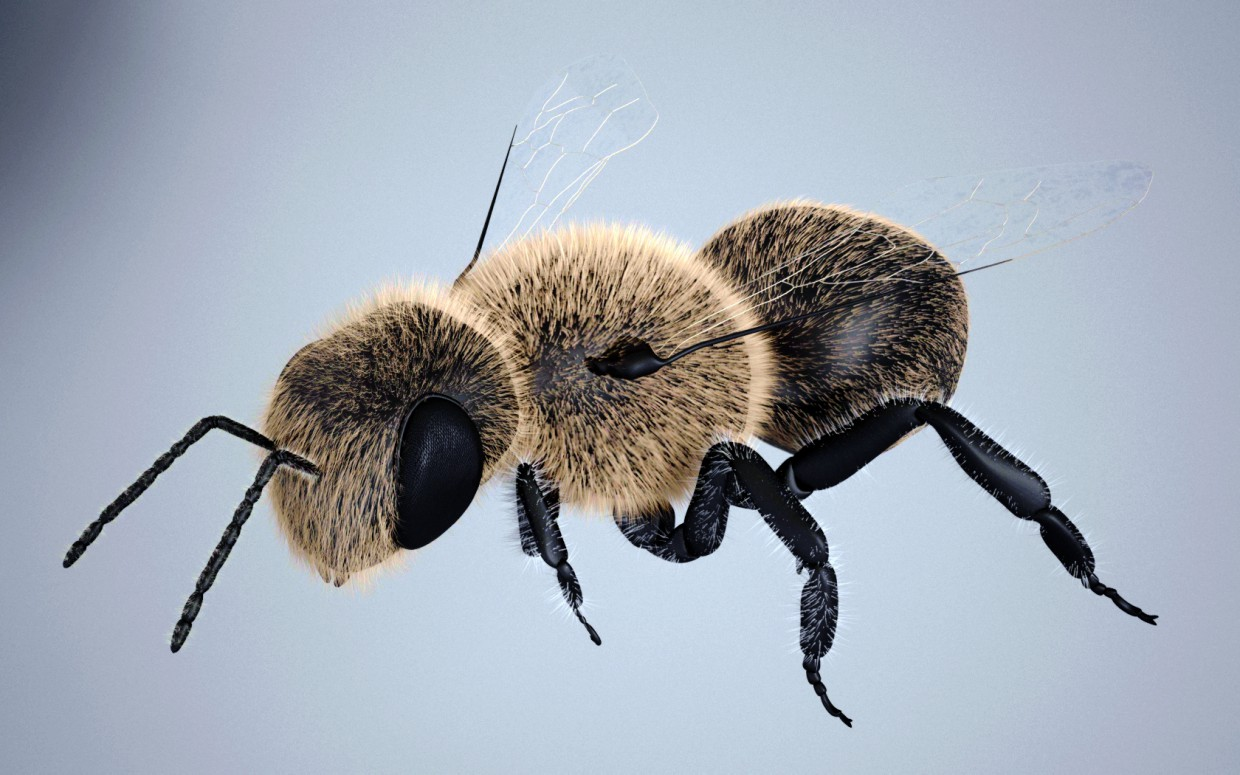 bee in 3d max vray image