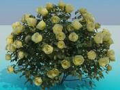 Lush bush roses