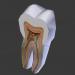 3d модель Структура зуба – превью