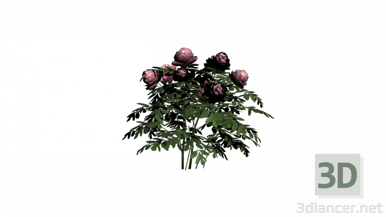 3d model PEONIA PLANT - preview