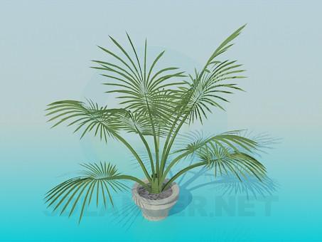 3d модель Кімнатна рослина – превью