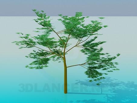descarga gratuita de 3D modelado modelo Serbal