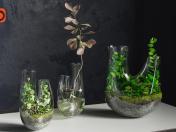Plant terrarium SET # 1