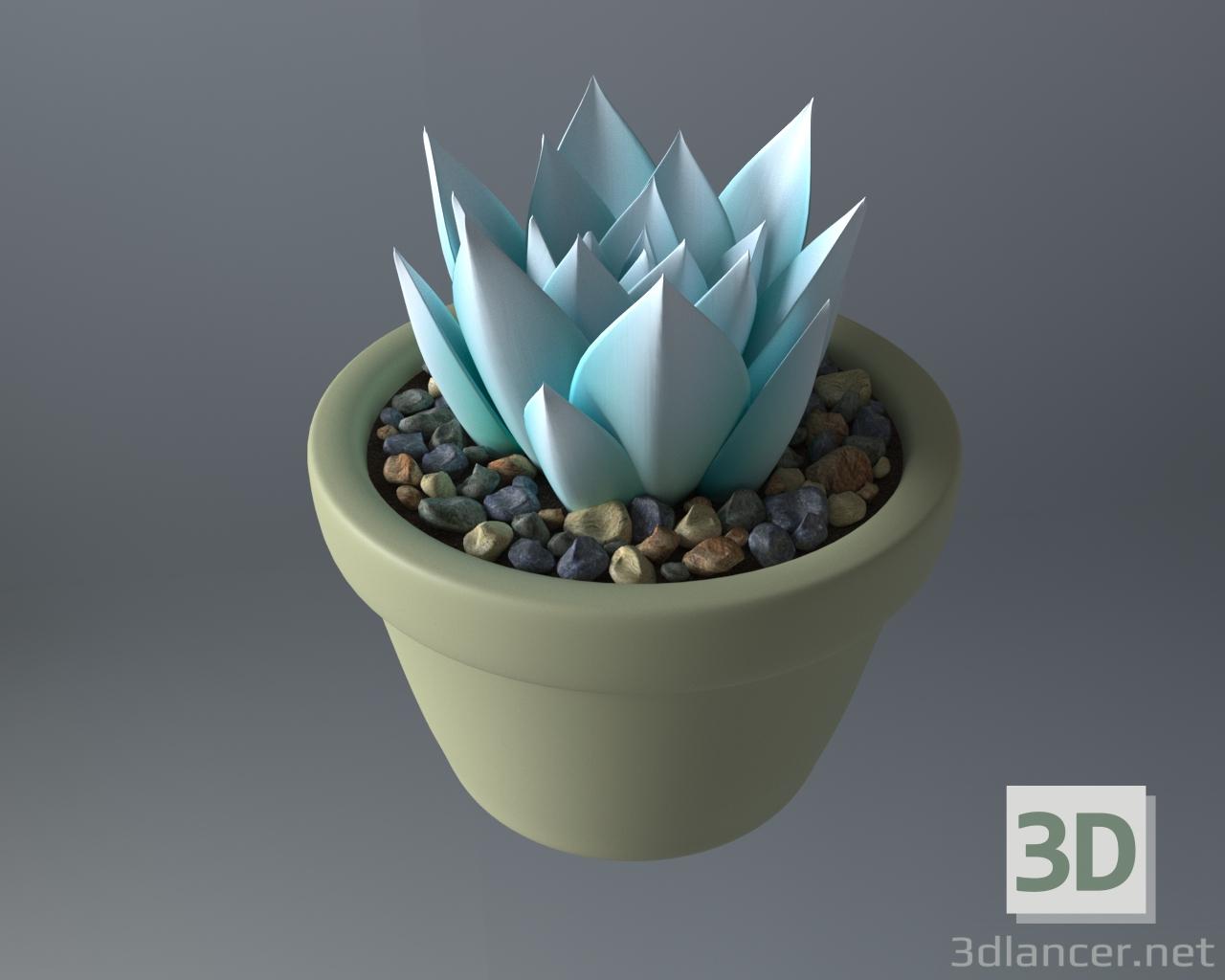 3d Succulent plant in a pot model buy - render