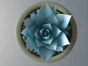 Succulent plant in a pot