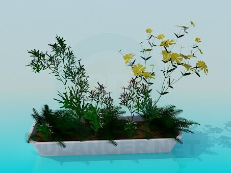 3d модель Довгий горщик з квітами – превью