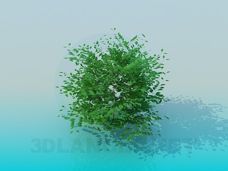 3d modeling Bush model free download