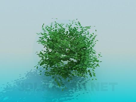 3d model Bush - preview
