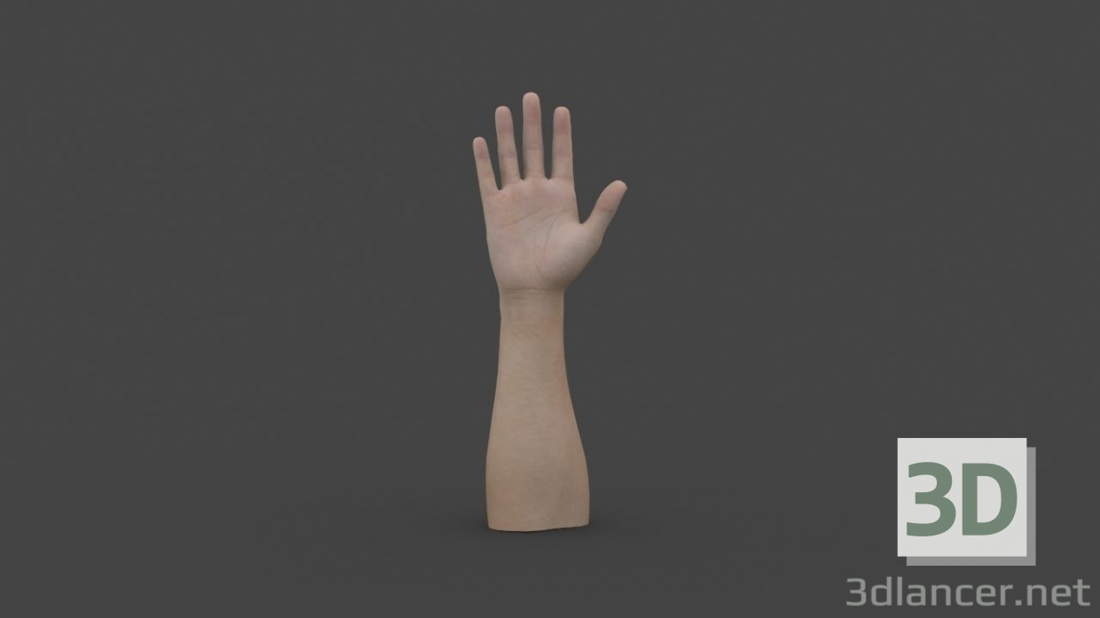 3d HAND-006 Rigged Hand model buy - render