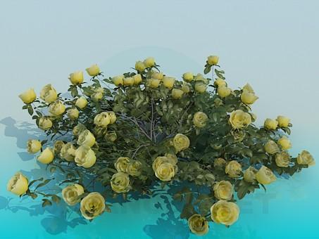 3d model Shrub roses - preview