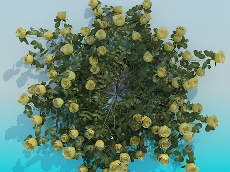 3d model Shrub roses - preview