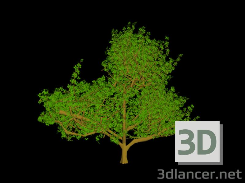 3 डी मॉडल पेड़ - पूर्वावलोकन