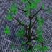 3D-Modellierung Birke, Hängebirke, Trauerbirke Modell kostenlos herunterladen