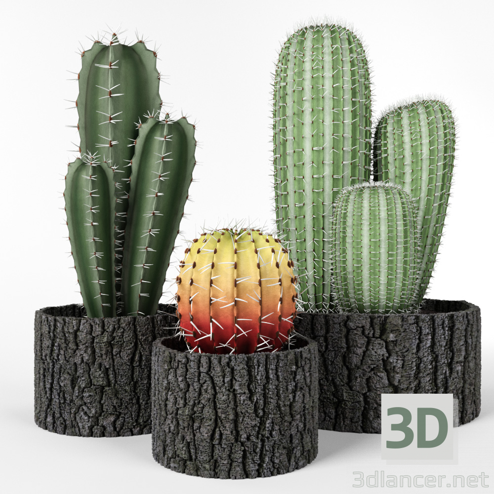 3d Cactus set model buy - render