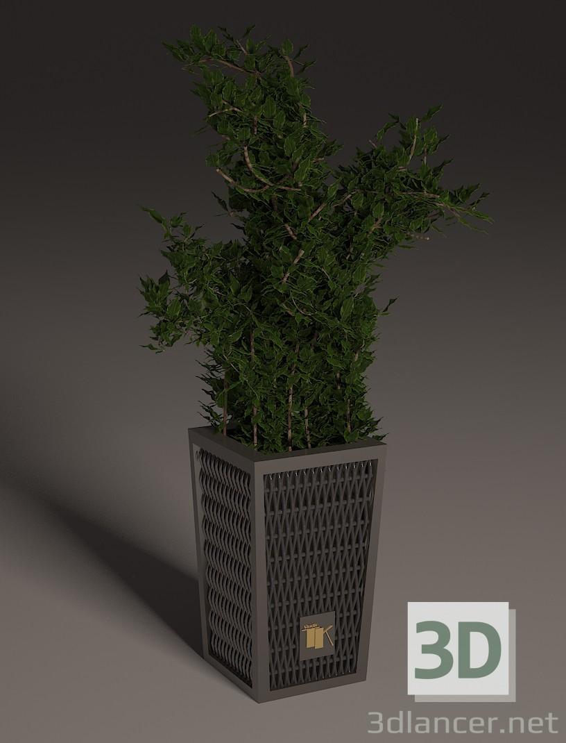 3d Potted plants model buy - render