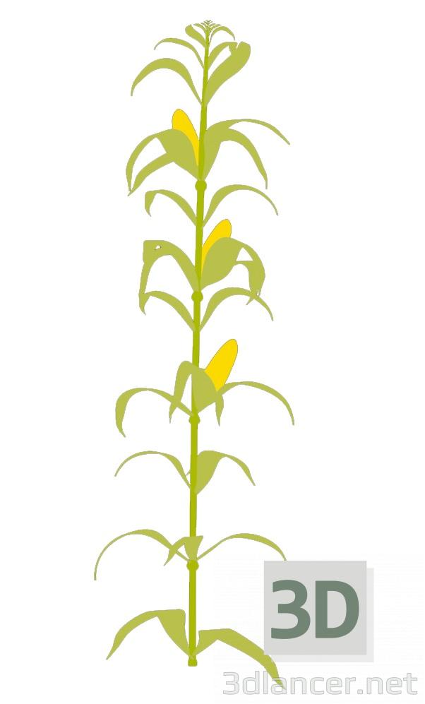 3D modeli Choclo bitki - önizleme