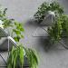3d Modular shelf with plants. model buy - render