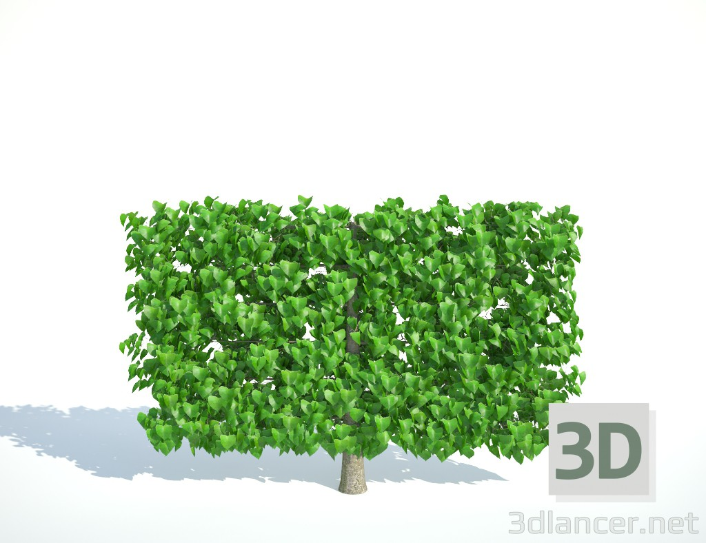 3d Lime tapestry low model buy - render