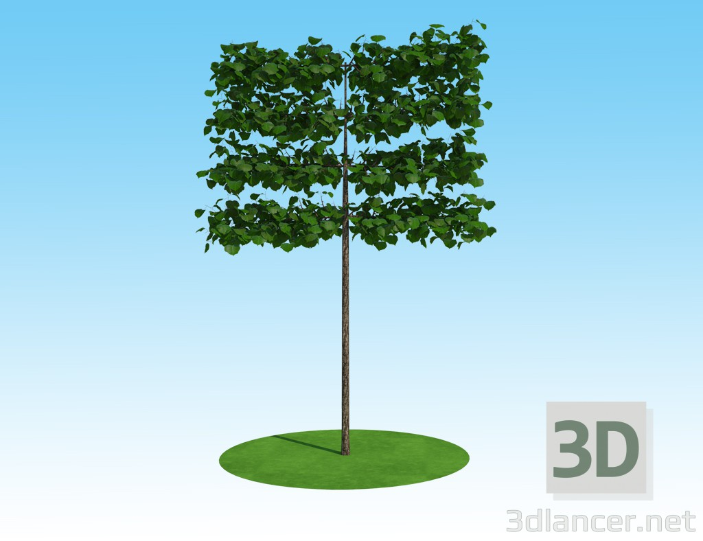 3D-Model 3D model Linden macrophylla tapestry on the trunk