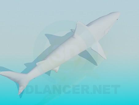 3d model Shark - preview