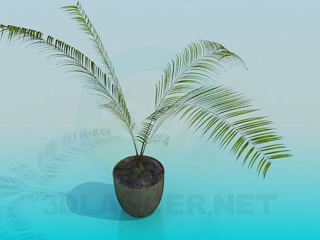 3d модель Комнатное растение - папоротник – превью