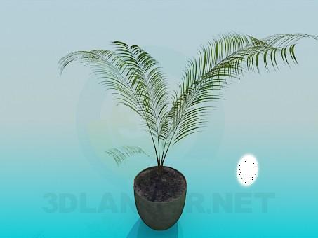 modelo 3D Planta del animal doméstico-fern - escuchar