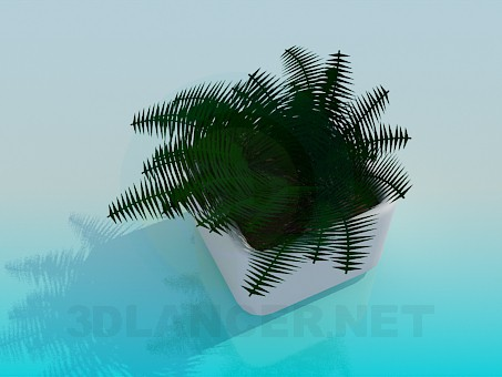 3d model Fern in a pot - preview