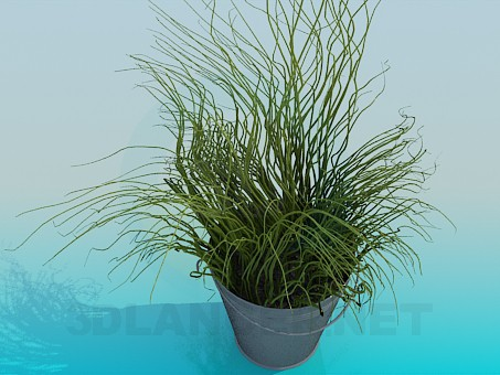 3d modeling Bucket with decorative grass model free download