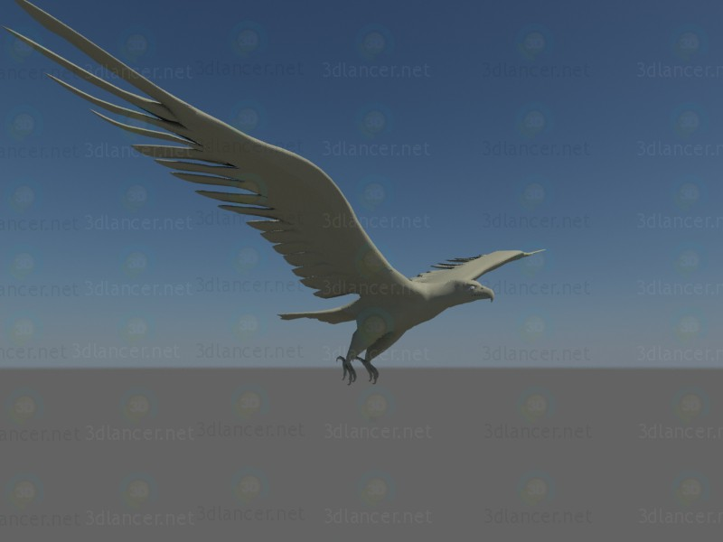 modello 3D Aquila - anteprima
