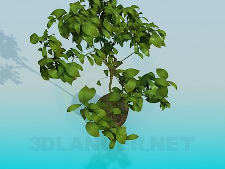 3d моделирование Комнатное растение модель скачать бесплатно