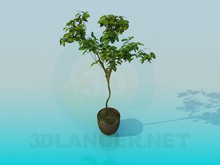 3d model House plant - preview