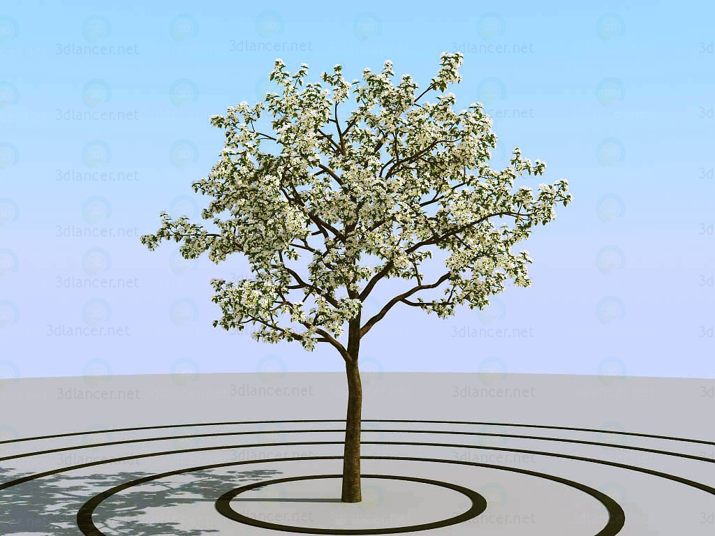 3d modeling Apple tree model free download