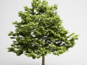 Árvore Alta