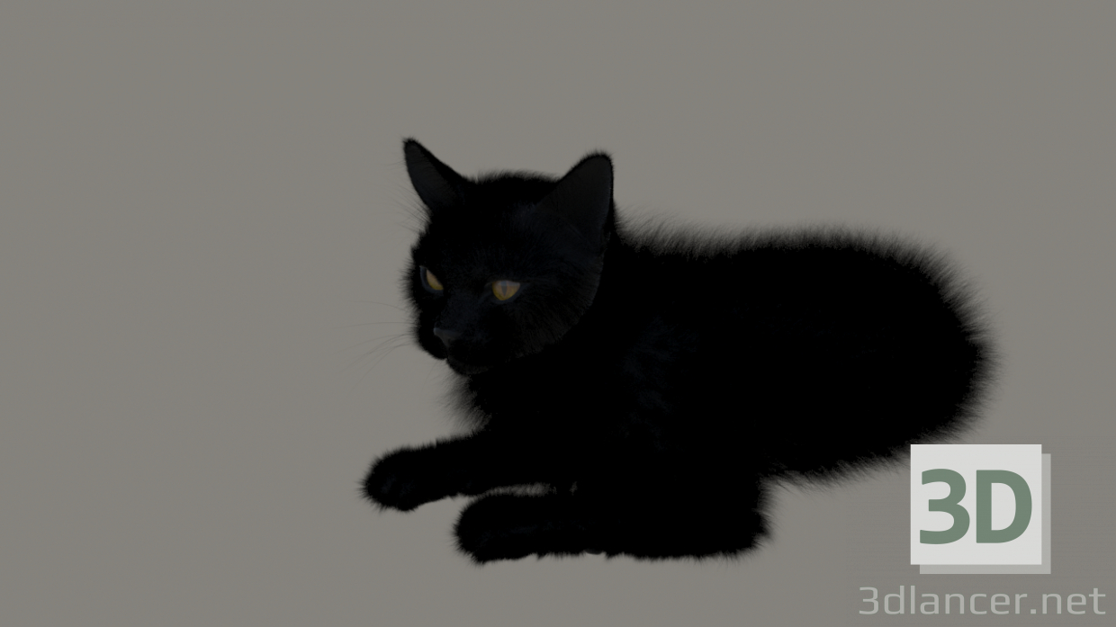 3d model Cat with black fur - preview