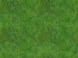 Trame d'erba