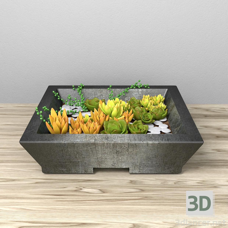 3d Succulents model buy - render