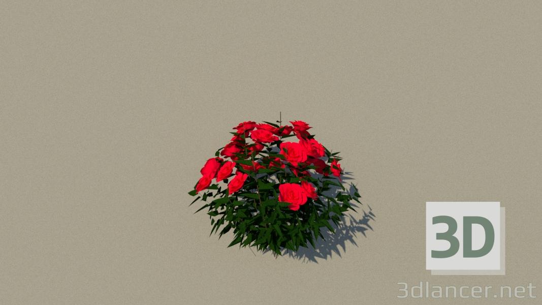 3d model roses - preview