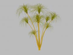 पपीरस का पौधा